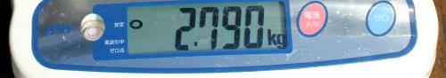 11.8 ooisama 2.790memori.jpg