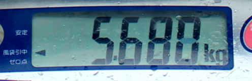 11.7 ooisama5.680.jpg